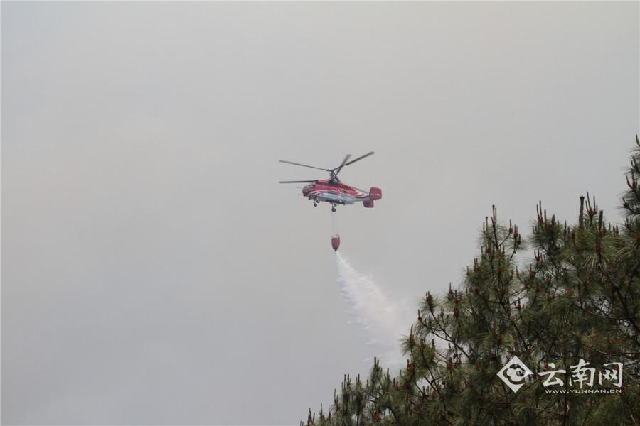 飞机迫降在树林